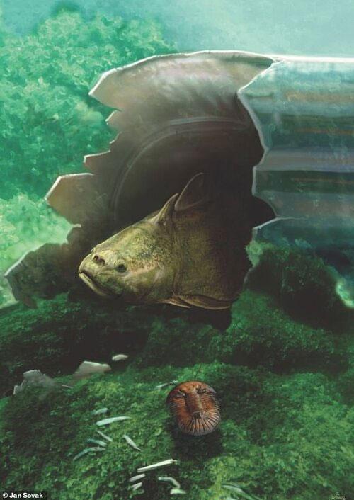 Cá acanthothoracid.