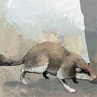 Hóa thạch hộp sọ của chuột cổ đại to như mèo