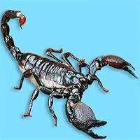 Cuộc chiến đỉnh cao giữa đỉa và bọ cạp, con nào sẽ thắng?