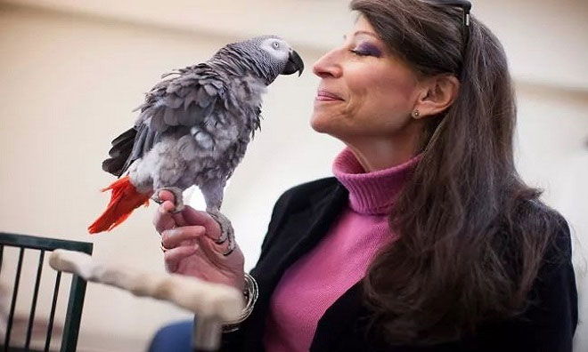 Vẹt Griffin và nhà tâm lý học Irene Pepperberg.