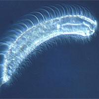 10 loài vật có tuổi thọ ngắn nhất thế giới