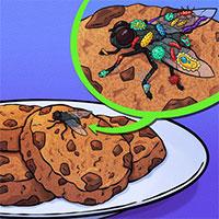 Chuyện gì xảy ra khi một con ruồi đậu lên miếng bánh của bạn? Tin tôi đi, bạn sẽ muốn vứt nó ngay!