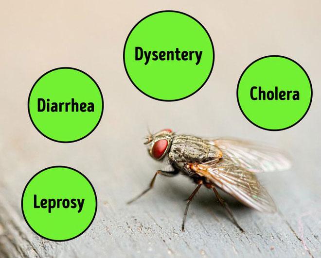 Mang đến ít nhất 65 loại bệnh
