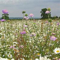 """Kế hoạch """"cao tốc hoa dại"""" giúp bảo vệ loài thụ phấn tại Anh"""