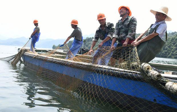 Đây là lần đầu tiên một đội đánh cá được triển khai khai thác cá ở hồ Thiên Đảo, sau khi đập thủy điện xả lũ