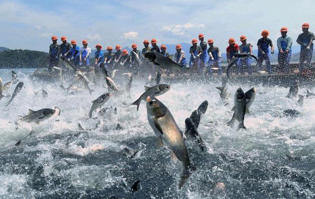 Cảnh tượng cá nhảy khỏi mặt nước