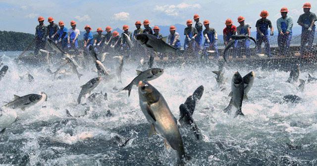 Trung Quốc: Đập thủy điện xả lũ, bội thu 25.000kg cá mè hoa
