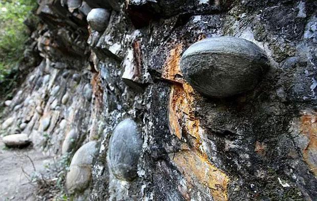 Vách đá đẻ trứng