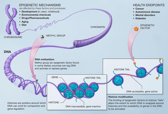 Dấu chỉ sinh học có thể góp phần vào xác định tuổi của từng nội tạng.