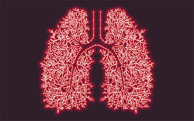 Thú vị là tuổi của một số cơ quan nội tạng tỏ ra nhạy cảm hơn với lối sống của chúng ta.
