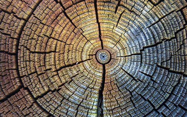Các nhà khoa họ hi vọng vân gỗ sẽ giúp chúng ta có một cái nhìn xuyên suốt lịch sử để lập kế hoạch tương lai.