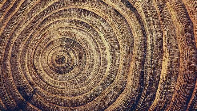 Lịch sử khí hậu Trái đất được viết ra trong những vân gỗ của những rừng cây vùng Nam Mỹ.