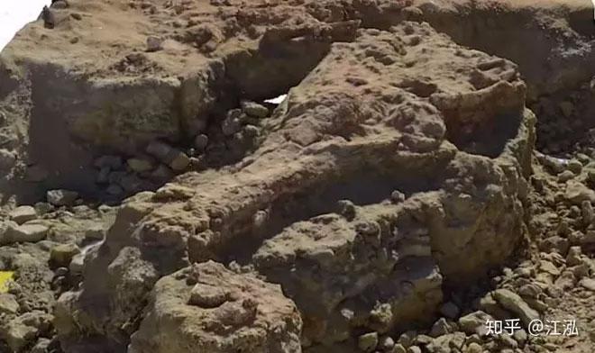 Hình dáng hóa thạch hộp sọ của loài cá sấu khổng lồ Machimosaurus rex.