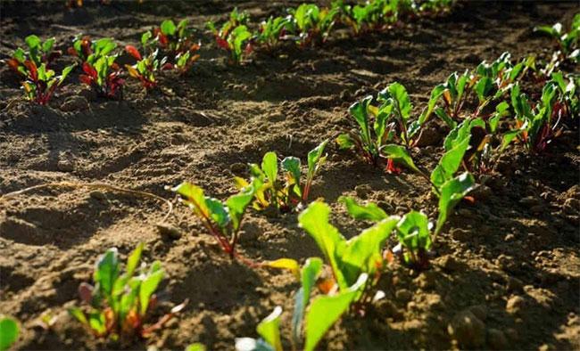 Cây cối tạo ra các tín hiệu điện, lan truyền qua các bộ phận của chúng.