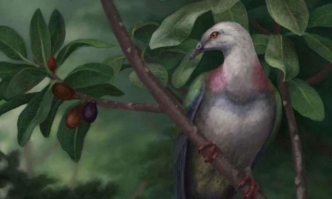 Chim bồ câu Tongoenas burleyi sống trên cây.