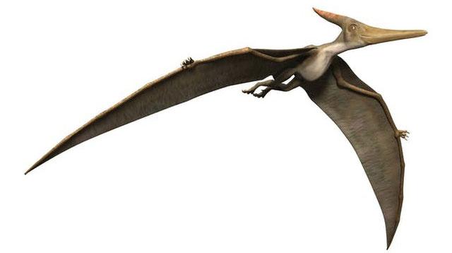 Dực long không phải là khủng long mà là bò sát biết bay.
