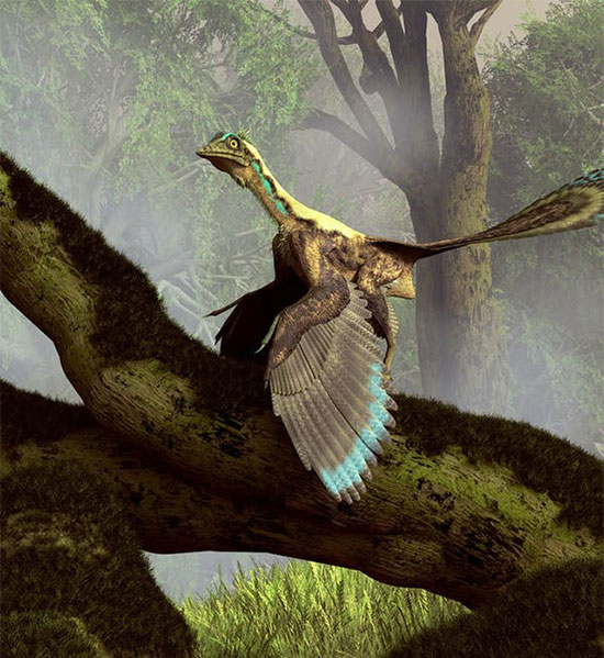 Khủng long bay archaeopteryx