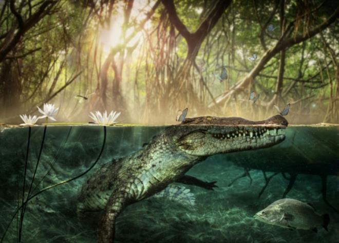 Nghiên cứu mới cho thấy cá sấu Mỹ có thể có nguồn gốc châu Phi.