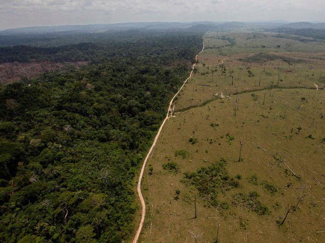 Quá trình chặt phá rừng tại Amazon có thể tạo tiền đề cho một dịch bệnh mới
