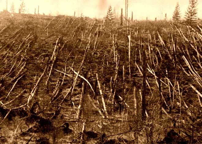 ...khiến 80 triệu cây cối bị quét sạch.