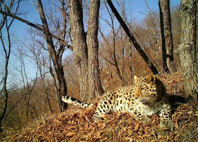 Báo Amur