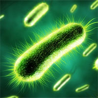 """""""Giải mã"""" vũ khí gây ung thư của loại vi khuẩn miễn nhiễm axít dạ dày"""