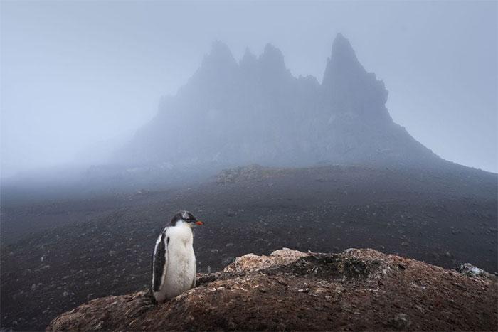 Chim cánh cụt ở Nam Cực