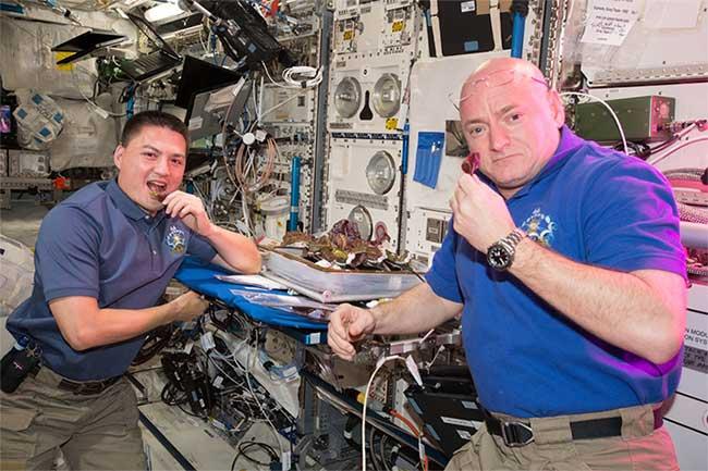 Rau diếp trồng trên Trạm vũ trụ Quốc tế (ISS) không chỉ ngon mà còn bổ dưỡng