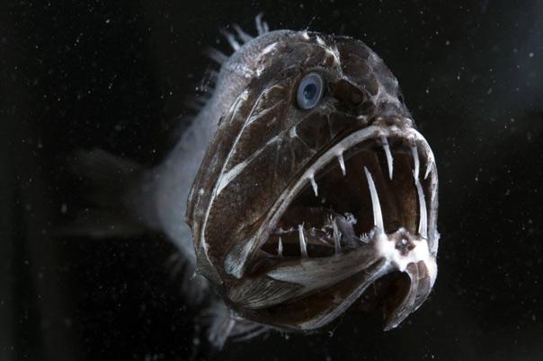Loài cá dưới biển sâu