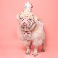 Chú chó có bộ lông màu hồng bẩm sinh hiếm hoi trên thế giới
