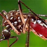 """Campuchia : Hơn 1.000 người mắc """"dịch bệnh bí ẩn"""" Chikungunya"""