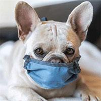 Phát hiện virus corona chủng mới ở thú cưng tại Nhật Bản