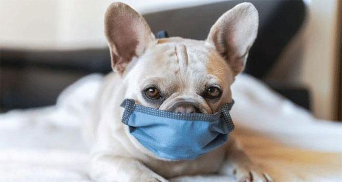 Nhật Bản đã phát hiện ra virus corona chủng mới trên thú cưng.