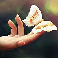 """""""Hiệu ứng cánh bướm"""" là sai, các nhà khoa học đã chứng minh được điều này ở cấp độ lượng tử"""