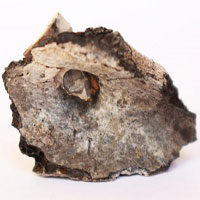 Hỏa táng người chết đã tồn tại từ ít nhất 9.000 năm trước