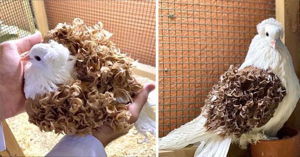 Chú chim với những lọn tóc xoăn đẹp như đi uốn ở salon!