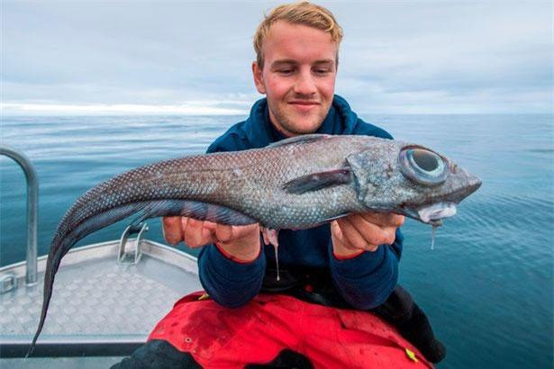 Oscar Lundahl đã mang con cá này về làm món cá phi lê.