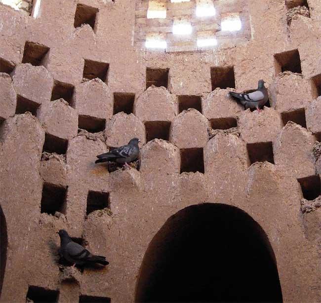 Những con chim không bị bắt và huấn luyện để chui vào tháp mà là chúng bị thu hút theo bản năng