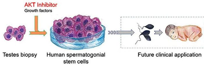 Phương pháp AKT inhibition