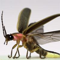 Chiêm ngưỡng video quay chậm côn trùng ở 3.200 khung hình/giây