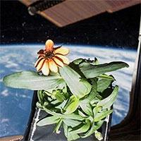 9 quốc gia gửi hạt giống vào không gian vũ trụ