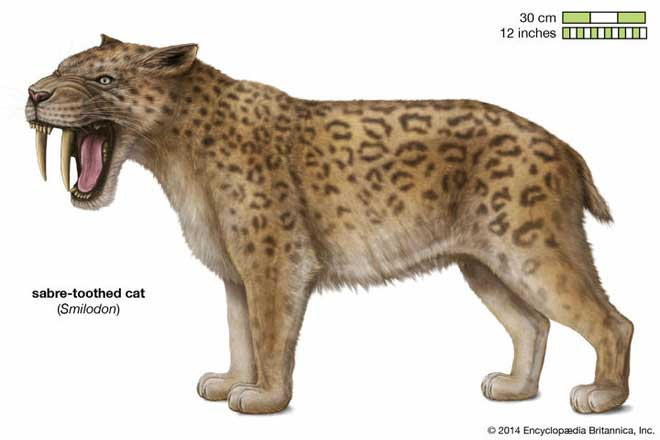 Cặp răng khổng lồ của hổ răng kiếm có thể đã tiến hóa để chọc thủng động mạch của voi răng mấu.