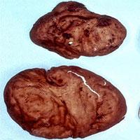 Các nhà nghiên cứu phát hiện loài nấm ăn mới