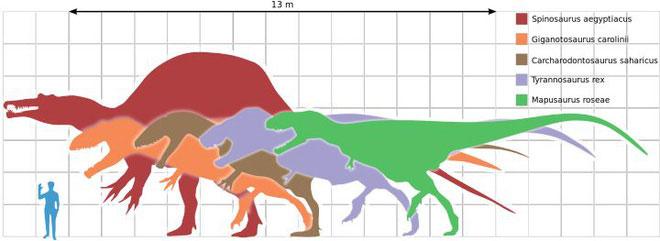 So sánh kích cỡ của các loài khủng long.