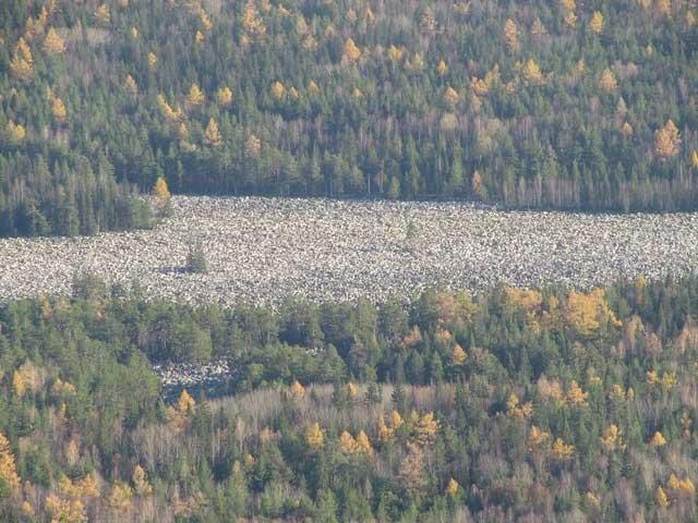 """Sông """"chảy"""" xuyên qua một cánh rừng thông rậm rạp."""