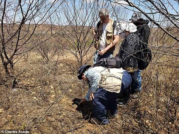 Các thợ săn thiên thạch từ Mỹ và Uruguay cũng đổ xô đến thị trấn Brazil.