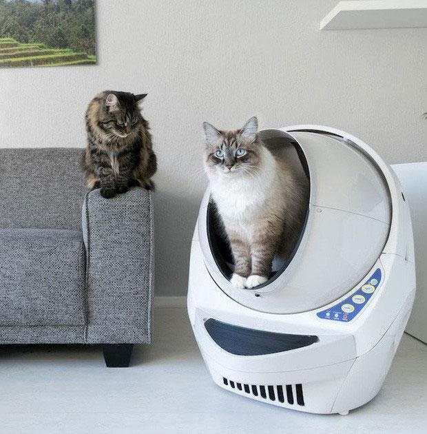 Toilet tự dọn vệ sinh cho mèo