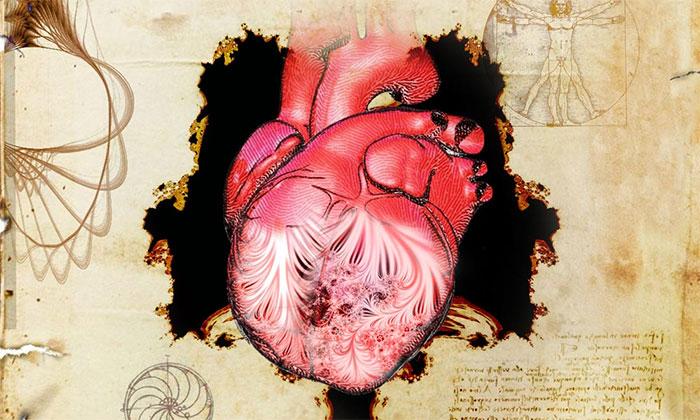 Hình ảnh quả tim và dải cơ được mô tả lần đầu bởi Leonardo da Vinci.