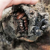 Tìm thấy xác gấu hang động còn nguyên mô mềm sau 39.000 năm