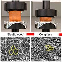 Tìm ra phương pháp biến đổi gỗ thành vật liệu đàn hồi như cao su